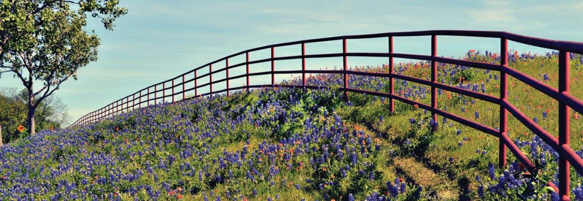 picture of a field of flowers with a fence going through it