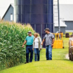 picture of people walking by a cornfield